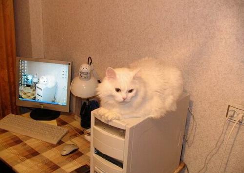 Кошки  фото 37