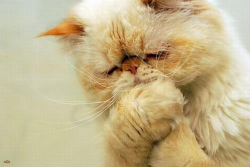 Кошки  фото 40
