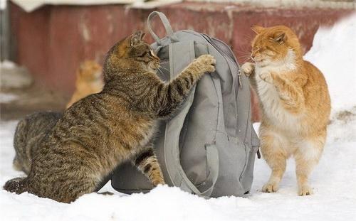 Кошки  фото 43