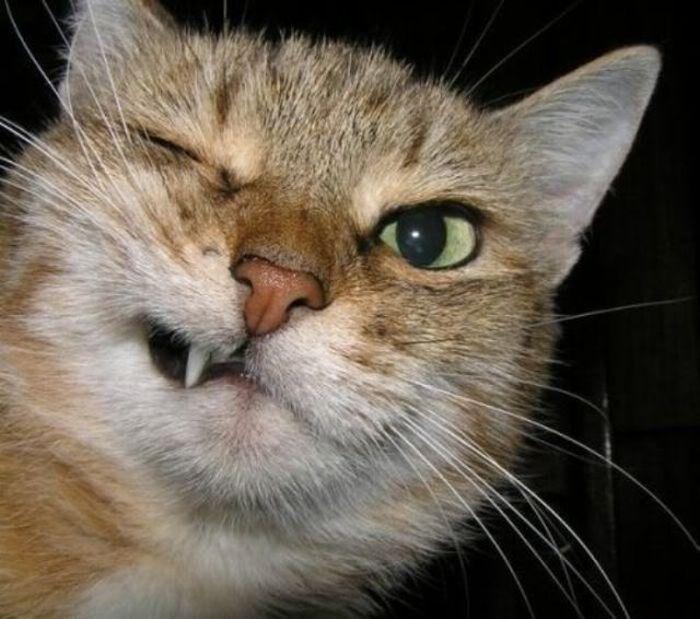 Картинки злых кошек с надписями смешные, раскраска антистресс