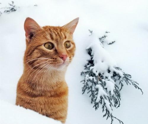 Кошки  фото 50
