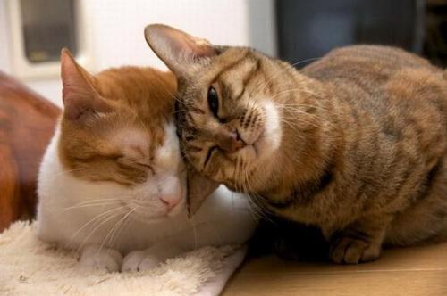 Кошки  фото 53