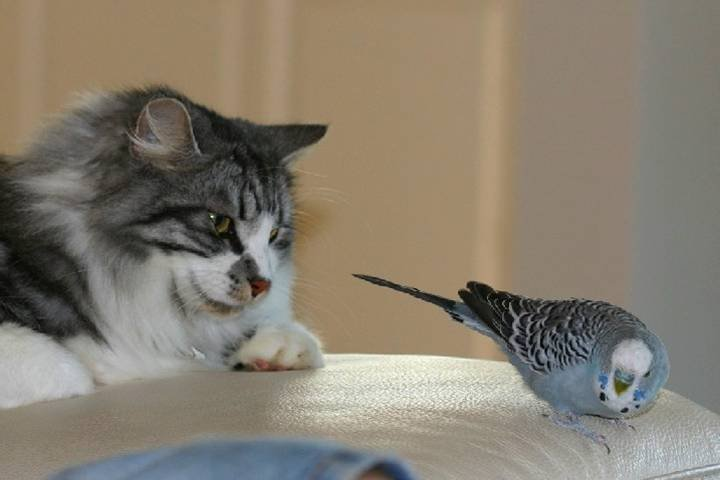 Смешные фото животных с подписями новые очень смешные, дороги