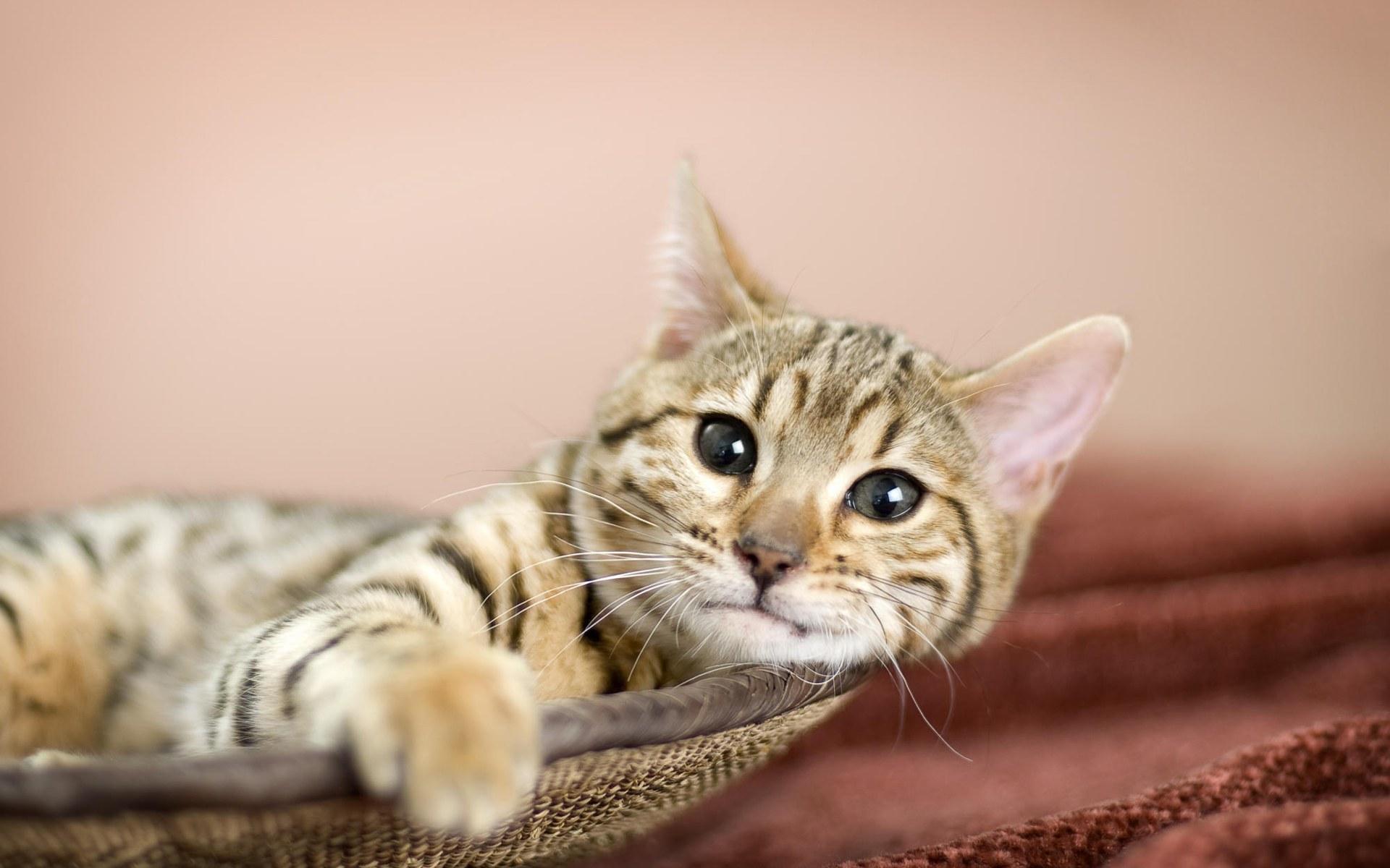 Фото кошек на рабочий стол