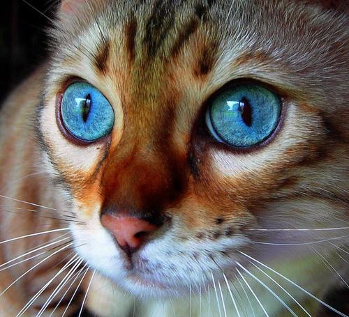 Животный мир.  Подборка фотографий кошек.  72 Фото.