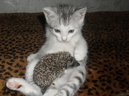 И еще фотографии кошек фото 1