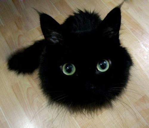 ...кот не мой, фото из интернетов.  Это удлиннитель сзади.