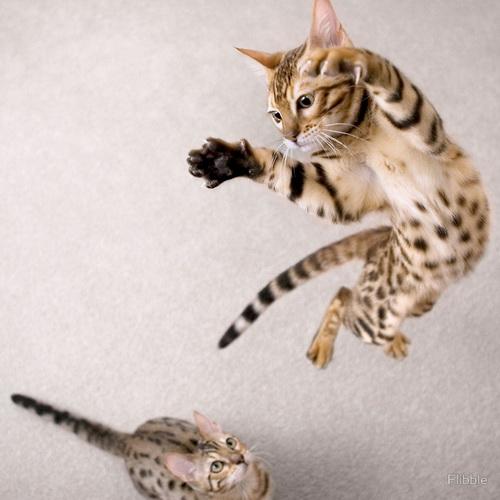 И еще фотографии кошек фото 0
