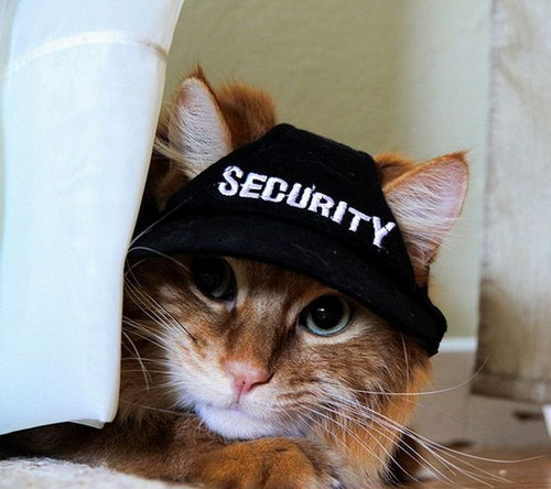 http://basik.ru/images/cats_photos_632/17.jpg