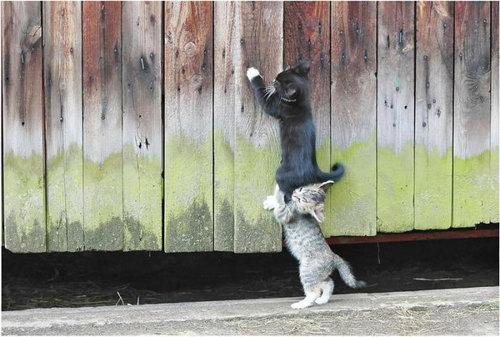Кошки коты котята фото 0