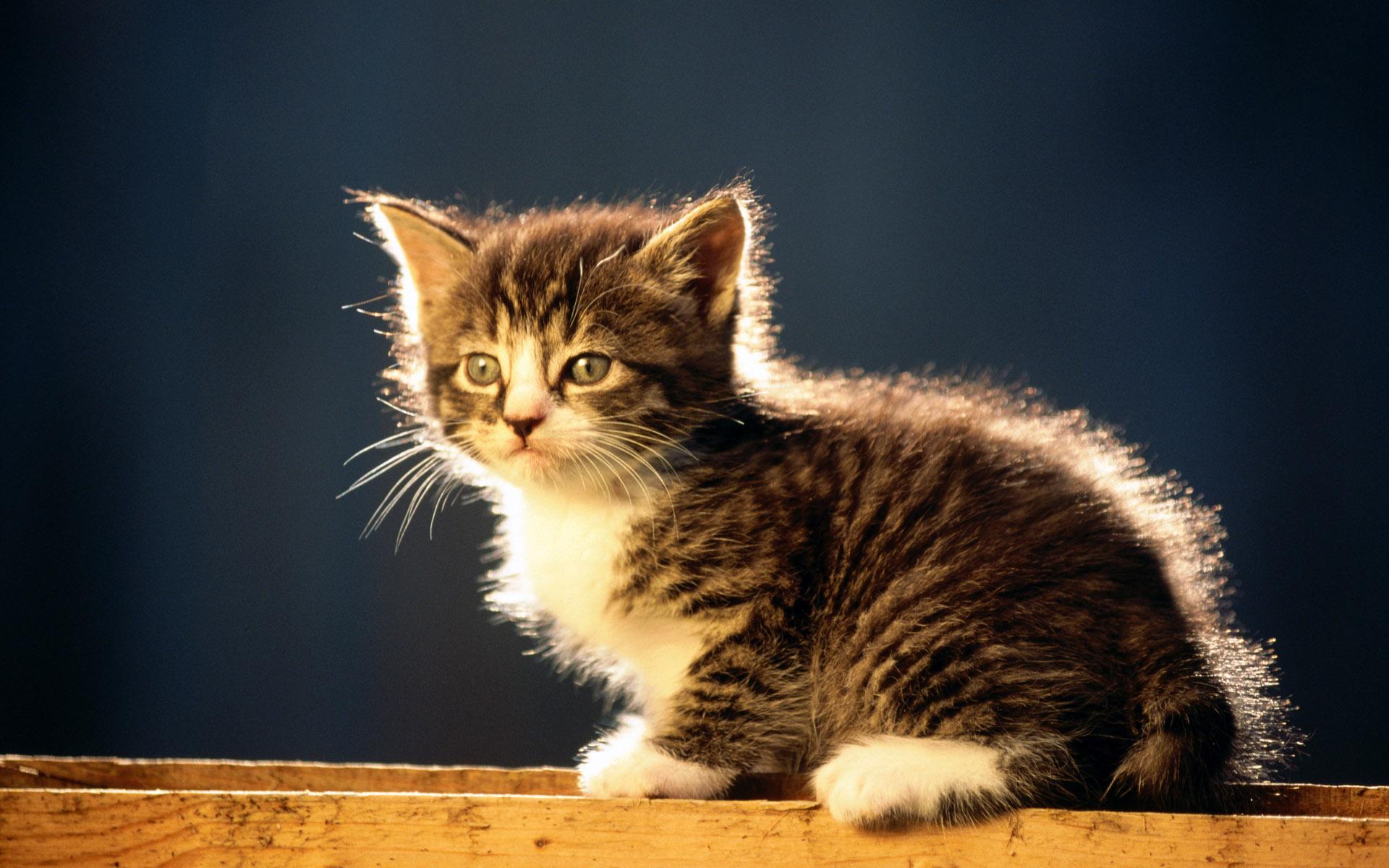 Одежда для кошек (30 фото) - moi-kotenok.ru