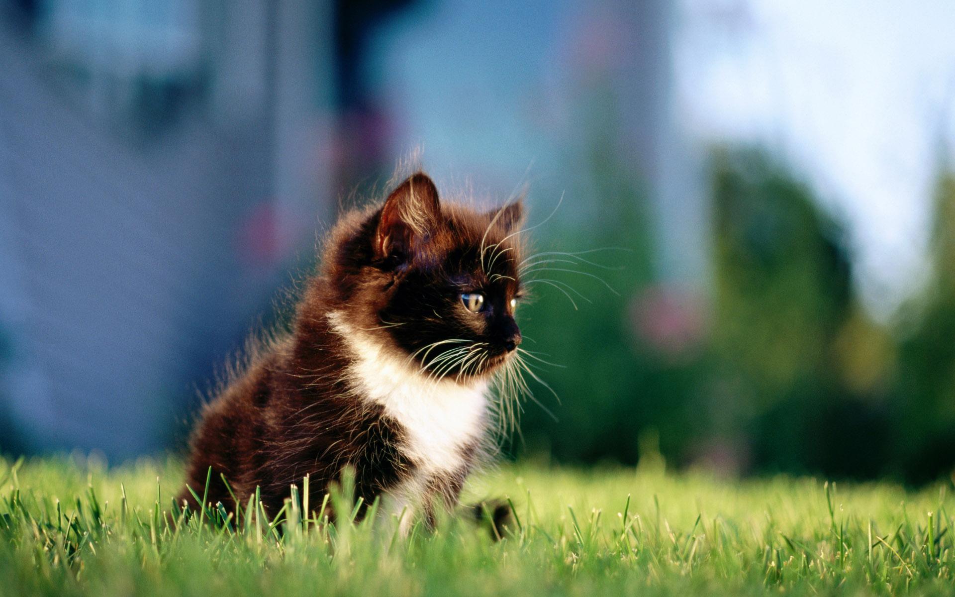 фото кошки и новорожденных котят