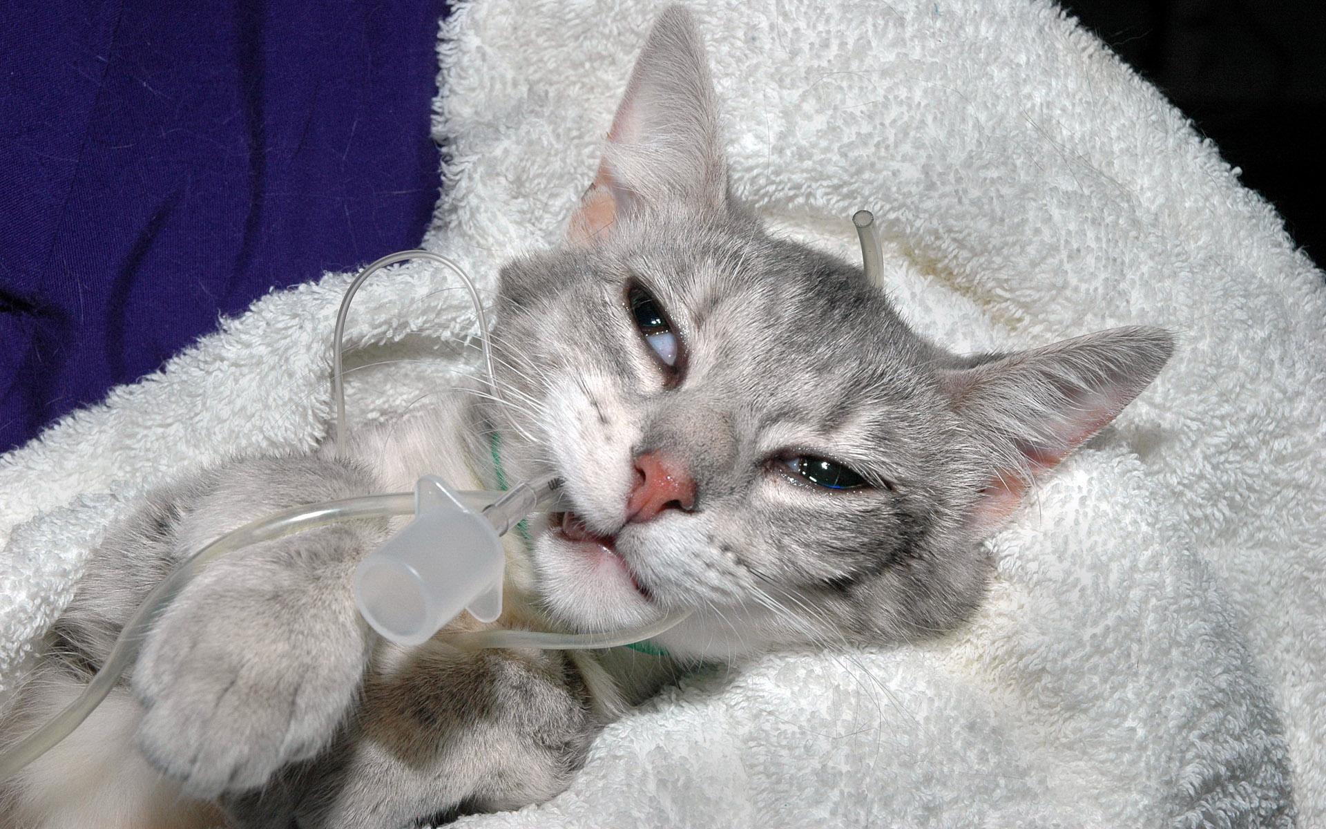 фото кошки с котятами карандашом