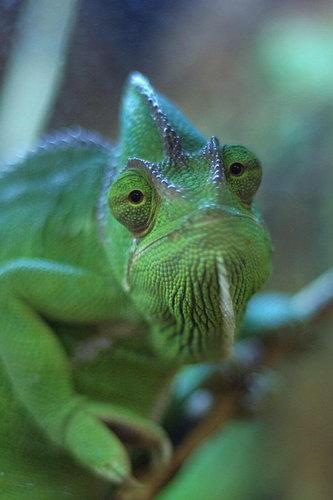 http://basik.ru/images/chameleon/42.jpg