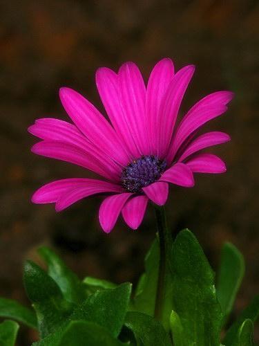 Макромир цветы и цвета фото 1