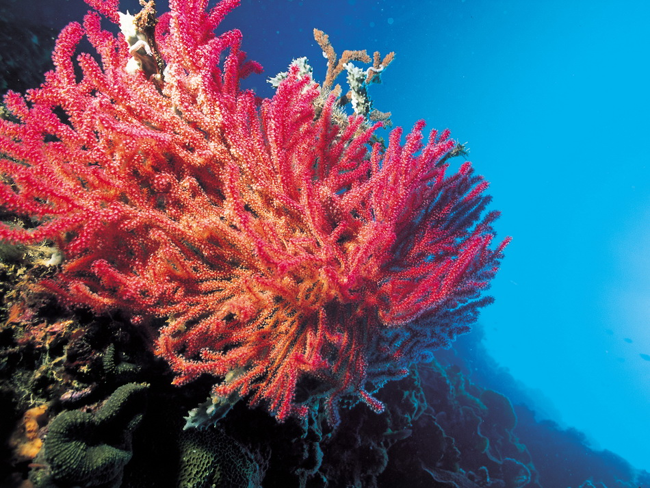 Basikru  Природа Кораллы