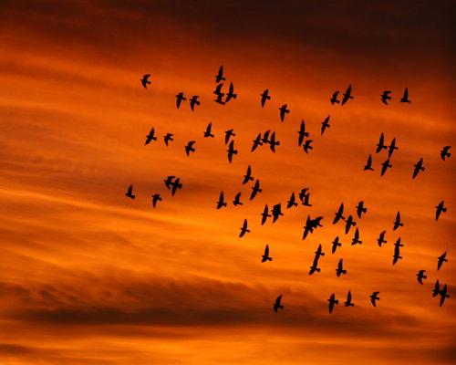 Птицы на рабочий стол фото 2