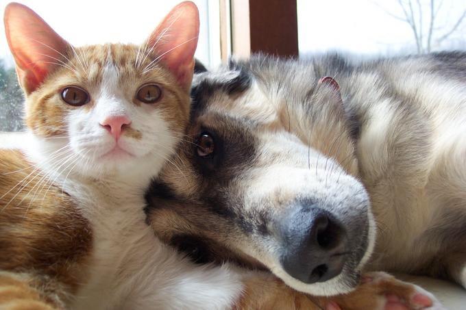 Поздравительная, прикольные картинки котов или собак