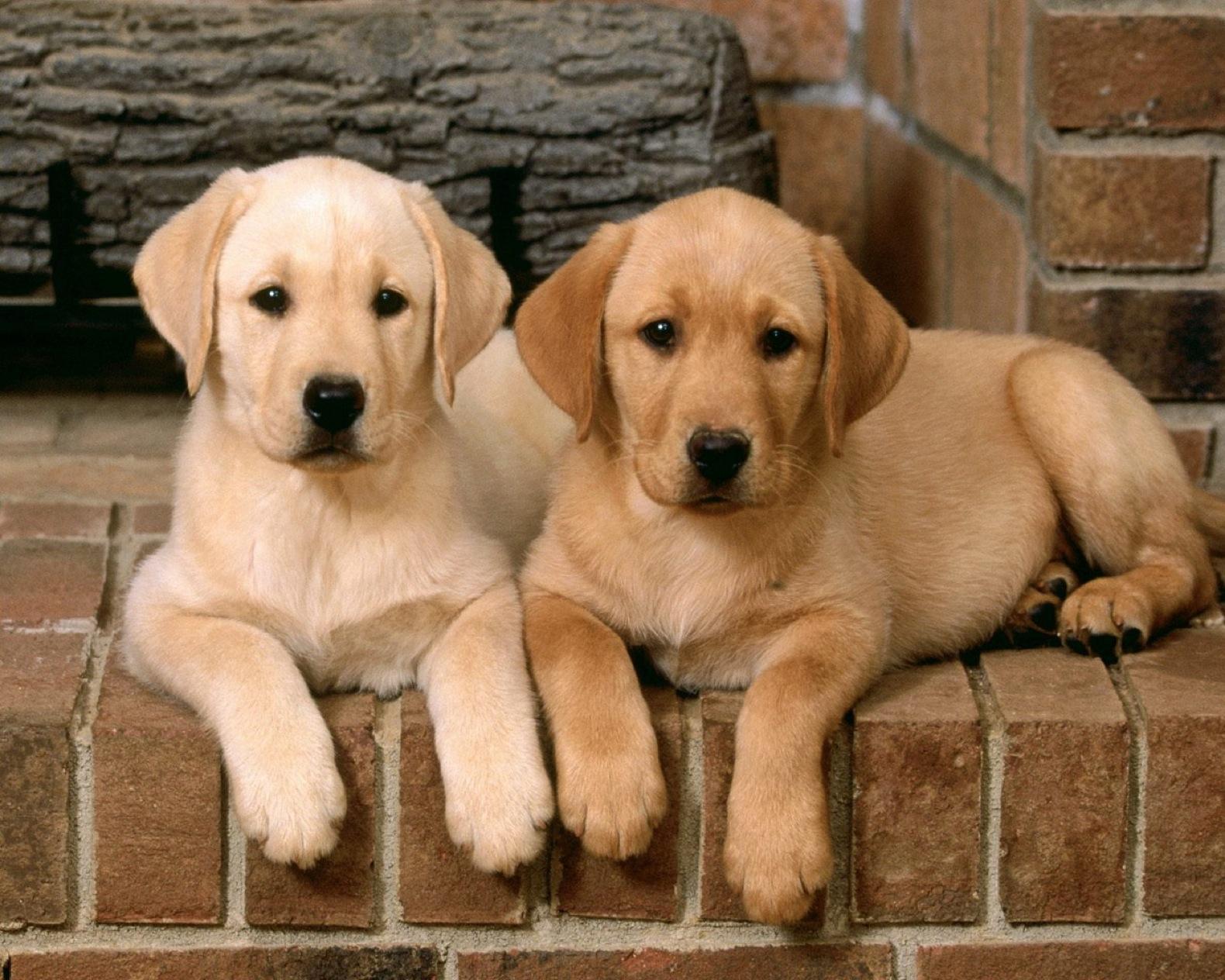 Картинки с собаками картинки с собаками, картинки