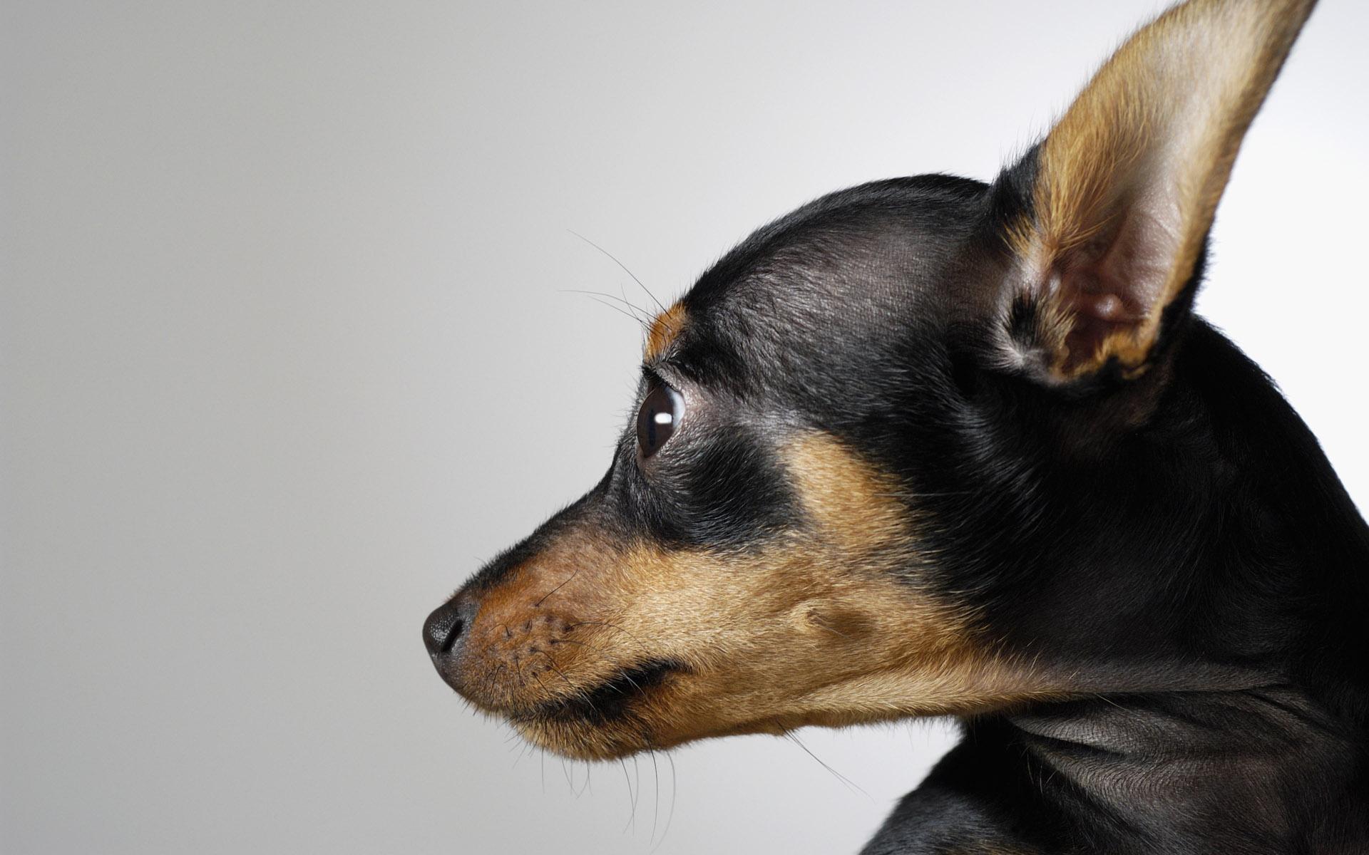 смотреть фото няшных собак