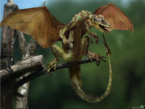 Драконы фото 28