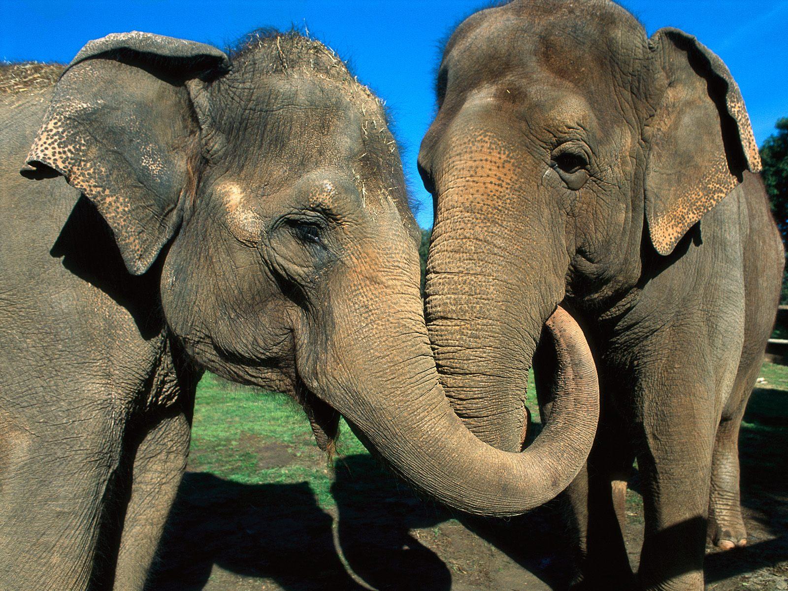 Смешная картинка со слоником, подписать открытку днем