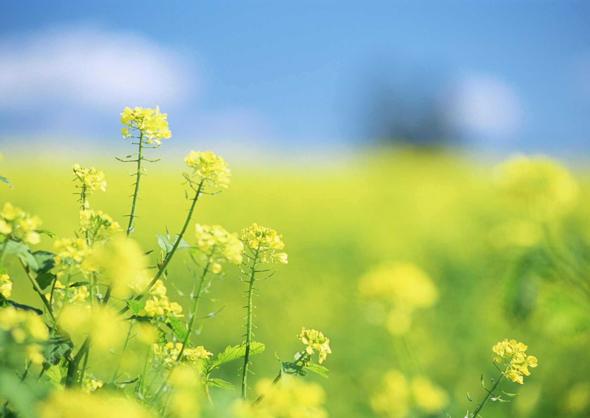 http://basik.ru/images/field_with_flowers/01_field_with_flowers.jpg