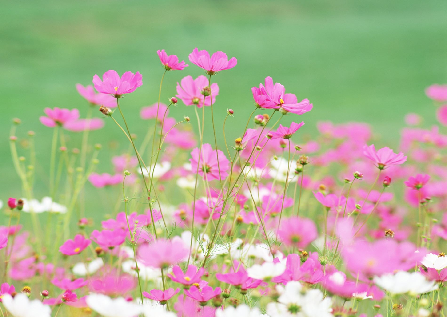 цветы полевые. фото