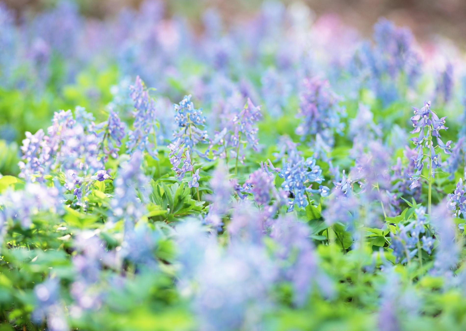 Картинки на рабочий стол полевые цветы