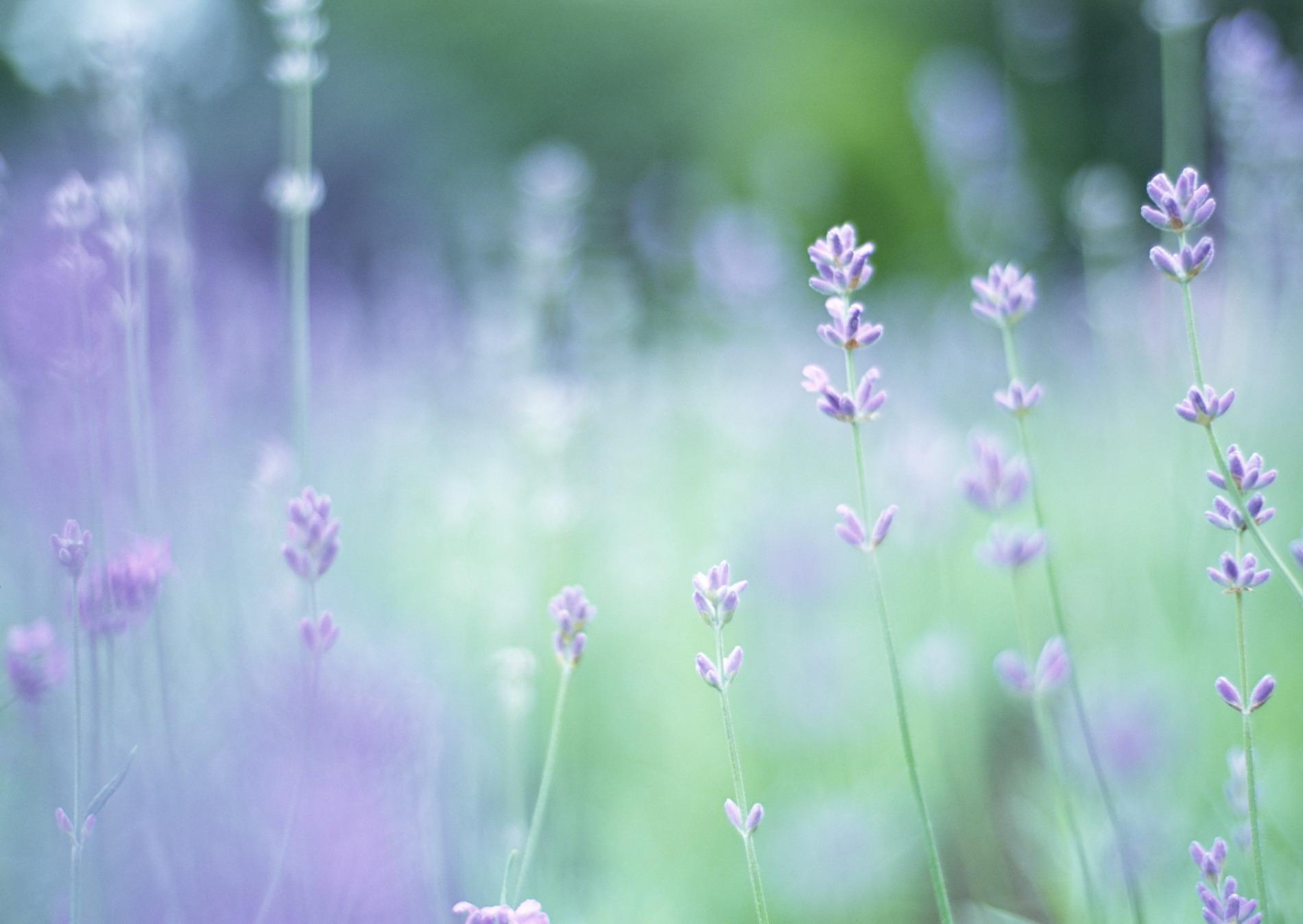 цветы в поле обои