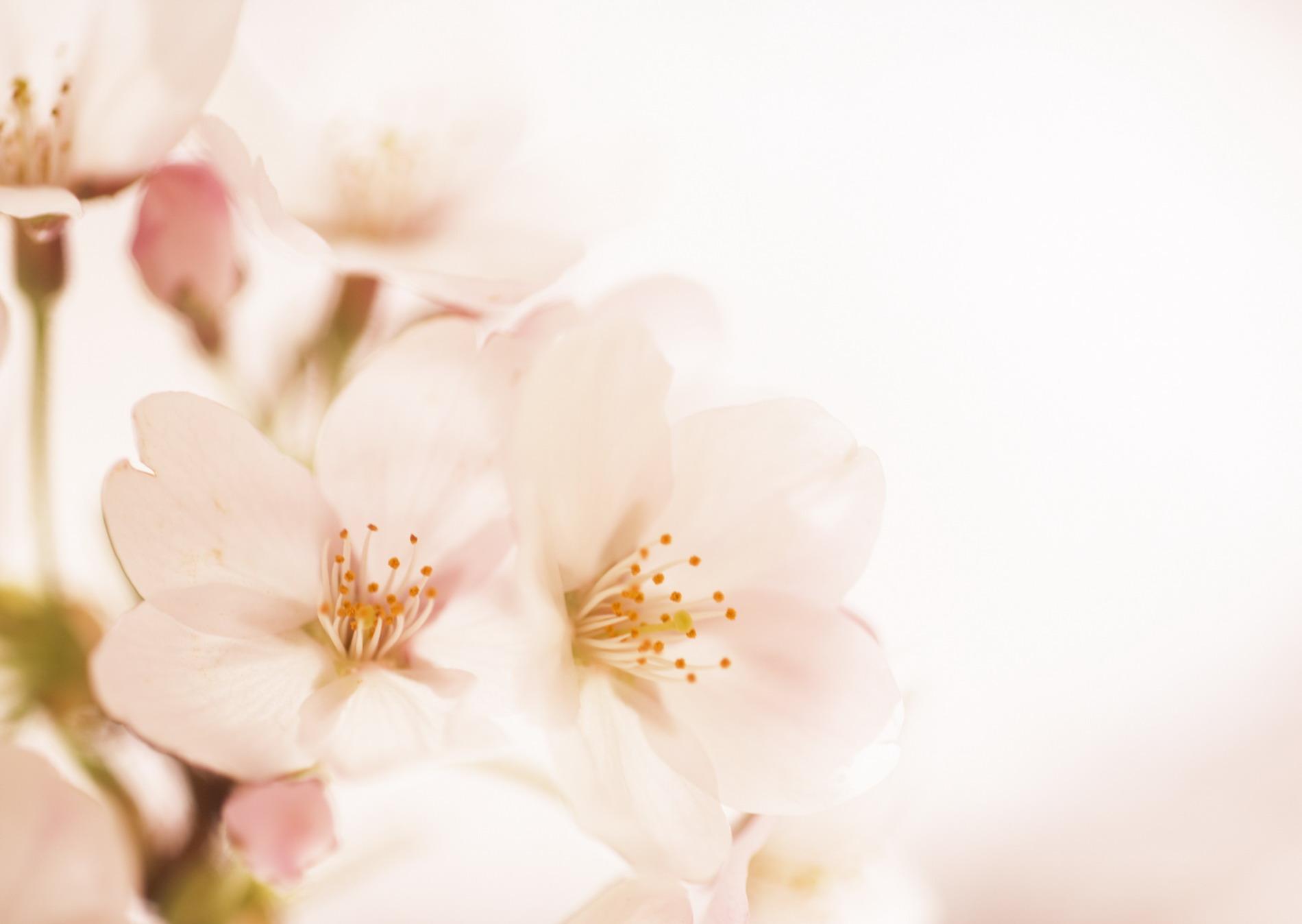 Полевые цветы фотография 1
