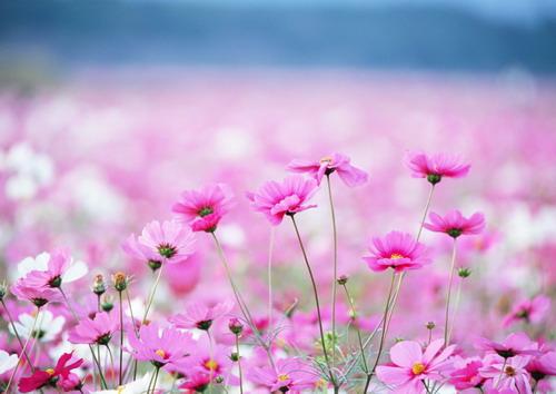 https://basik.ru/images/field_with_flowers/short.jpg