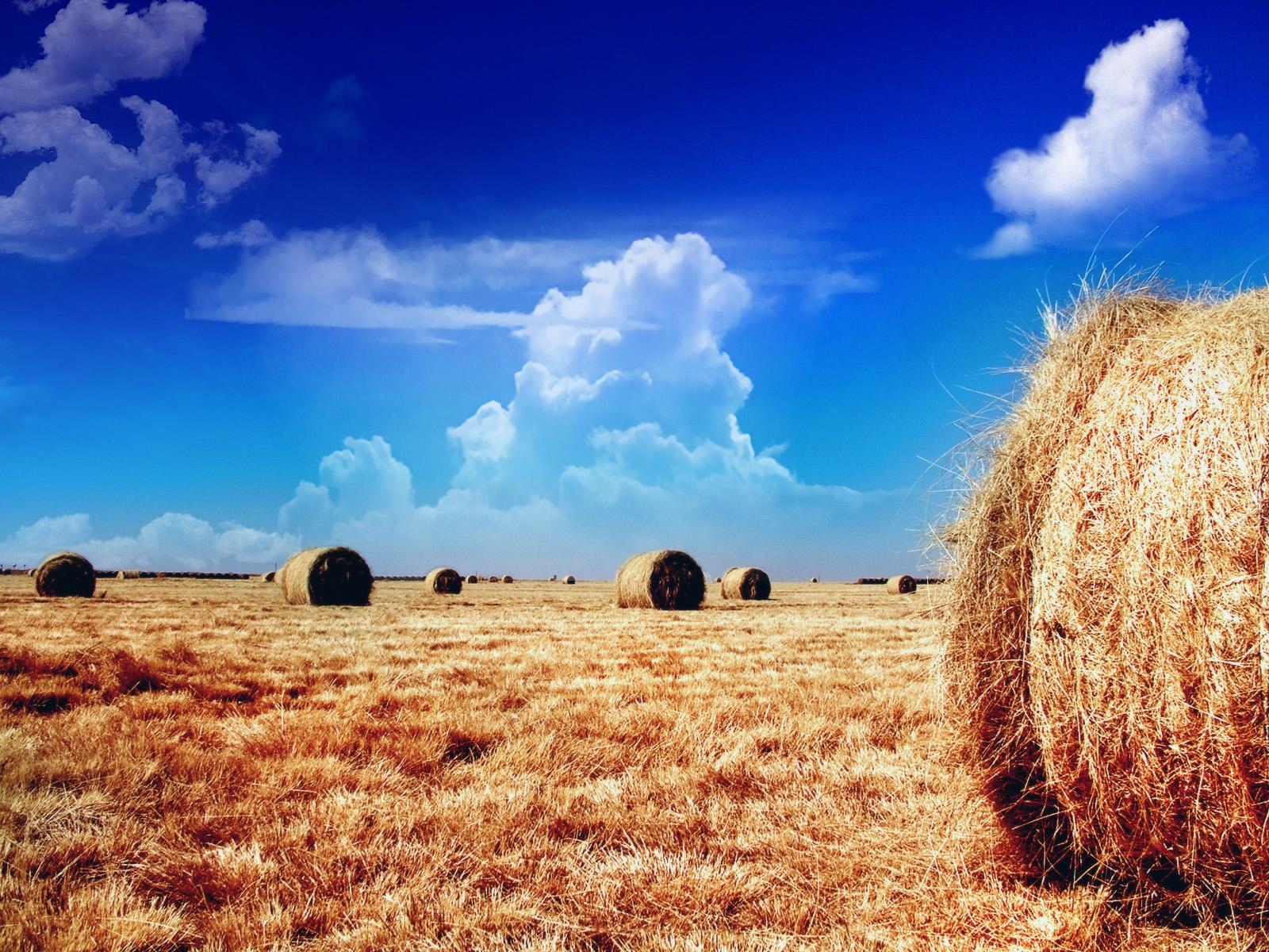 солома поле небо облака straw field the sky clouds  № 1783654  скачать