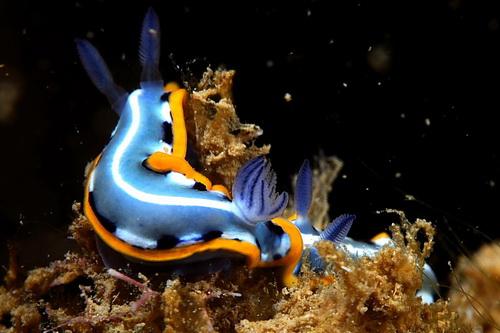 Красоты подводного мира фото 6