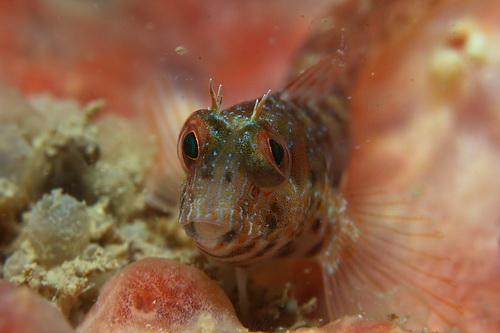 Цветы подводного мира