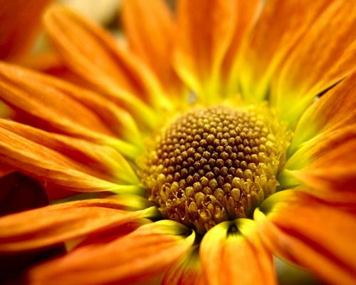 Цветы на рабочий стол фото 20