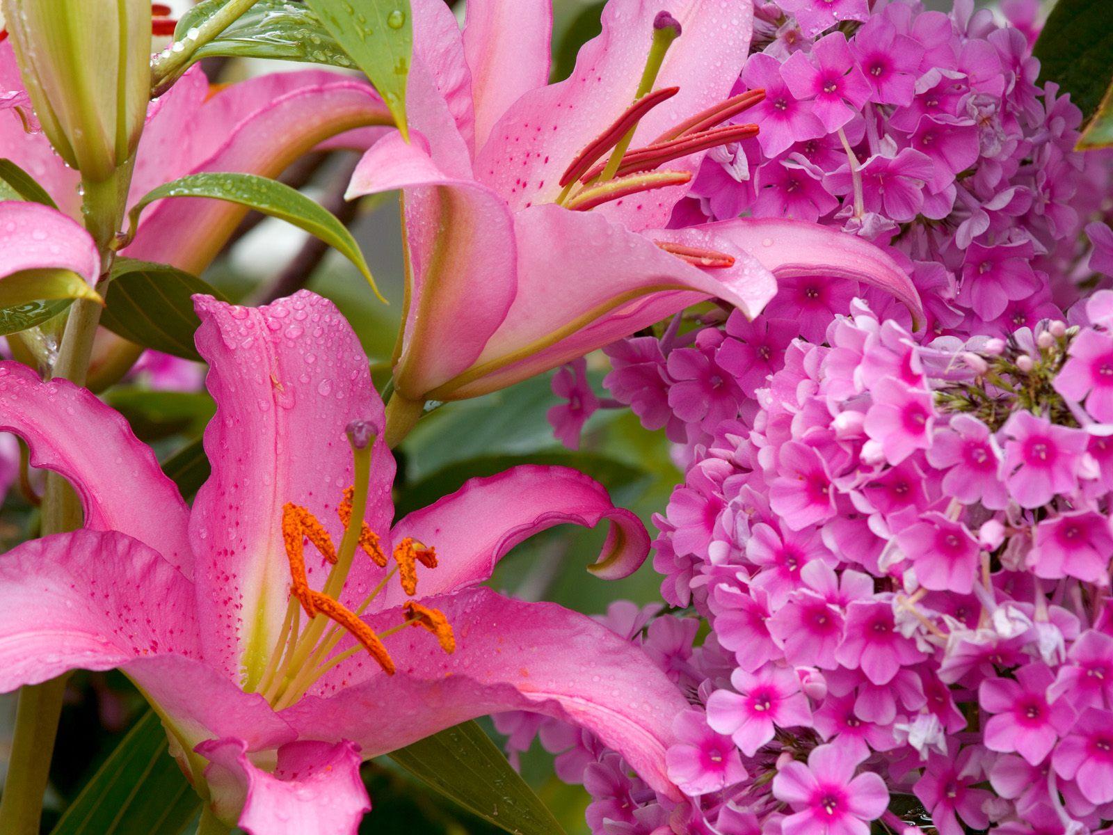 Обои на рабочий стол цветы на рабочий