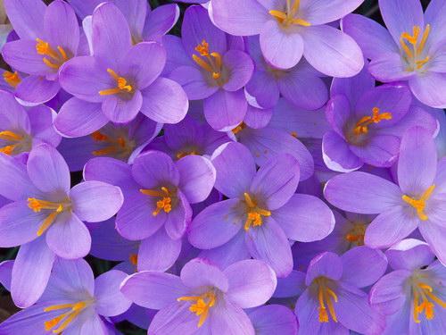 Природа :: Цветы фото 1