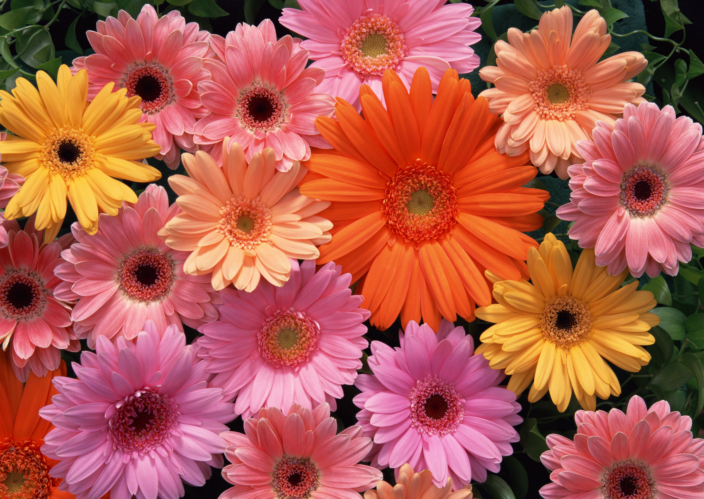 шестигранный картинки всех расцветок только