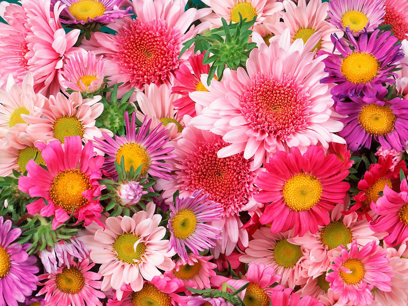 На рабочий стол цветы на рабочий стол