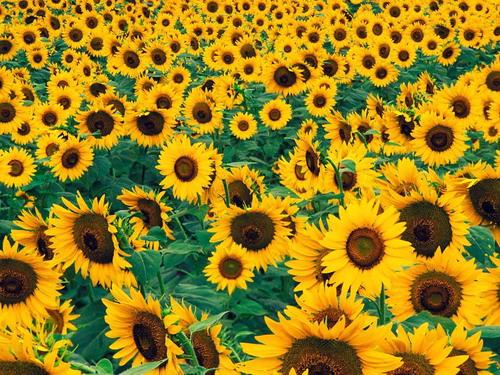 Цветы на рабочий стол фото 17
