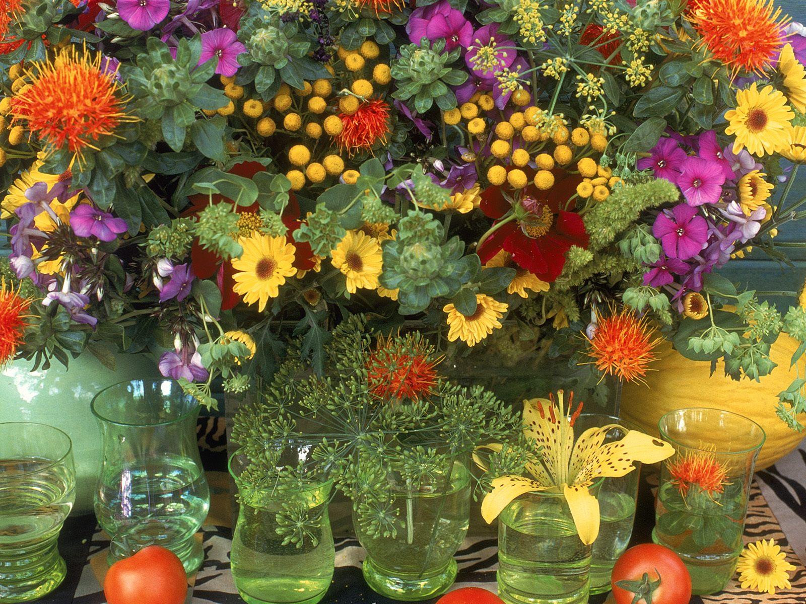 Гелихризум разновидности и выращивание из семян в