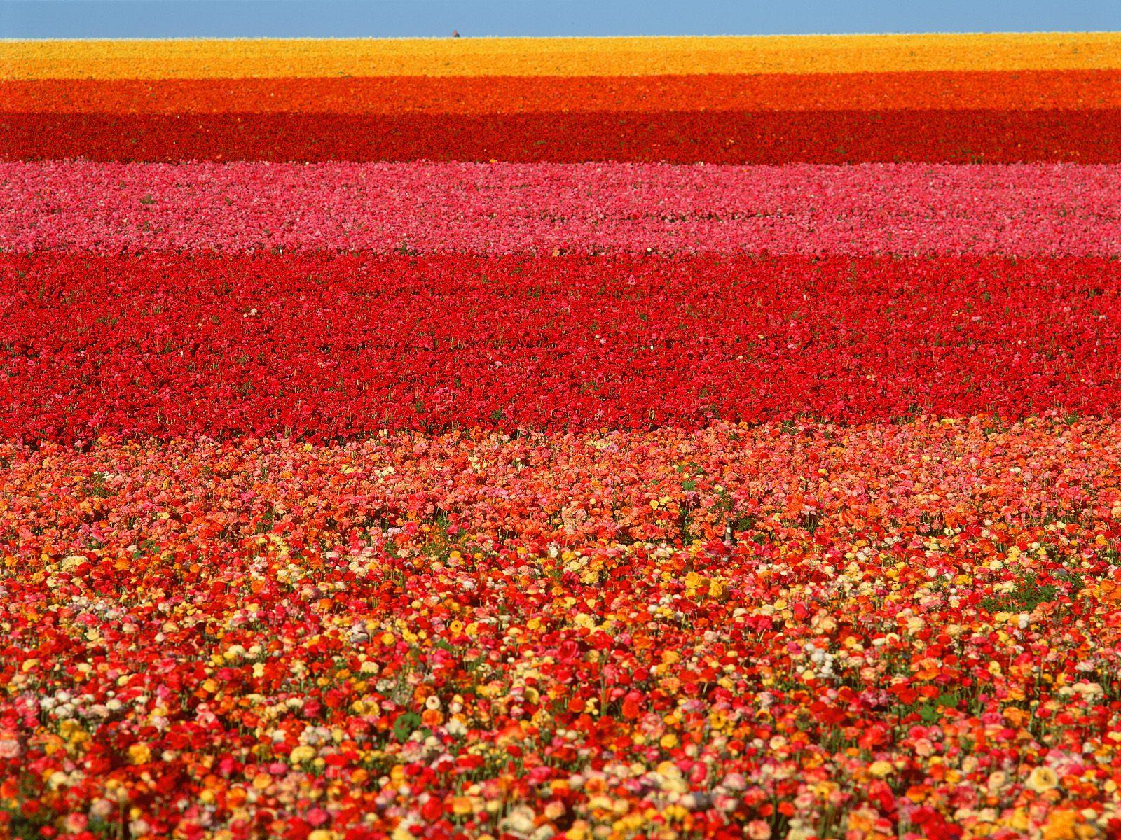 На рабочий стол цветы фотография 1