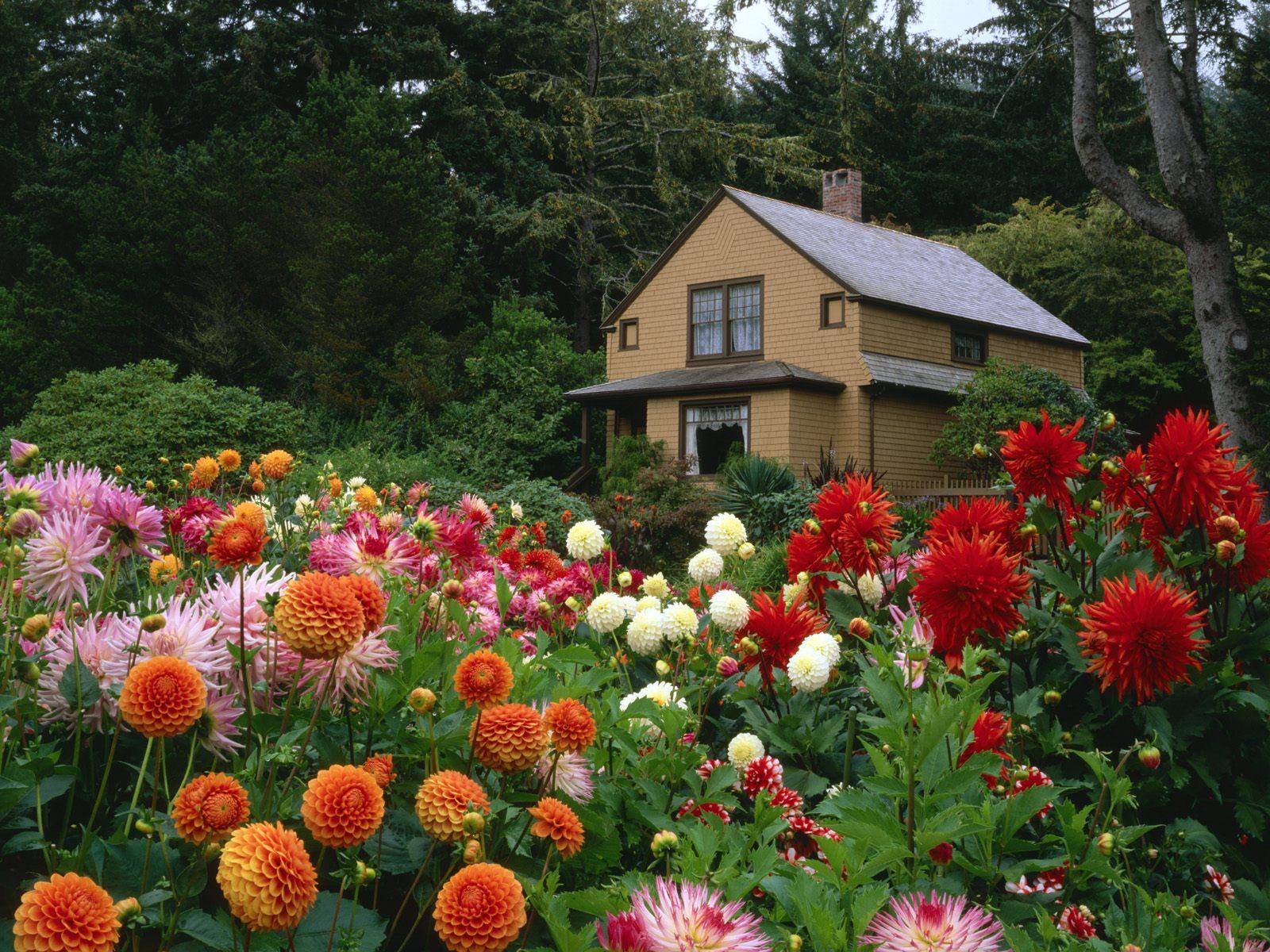картинки на рабочий стол дом и цветы был километре берега