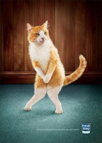 Реклама наполнителя для кошек фото 2