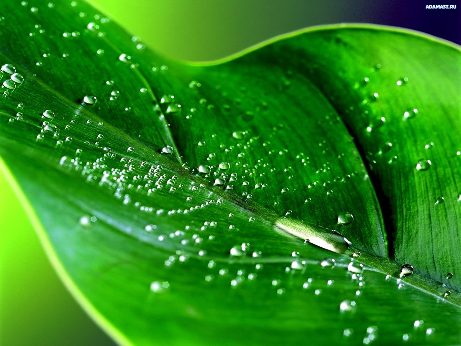 обои фото зеленые