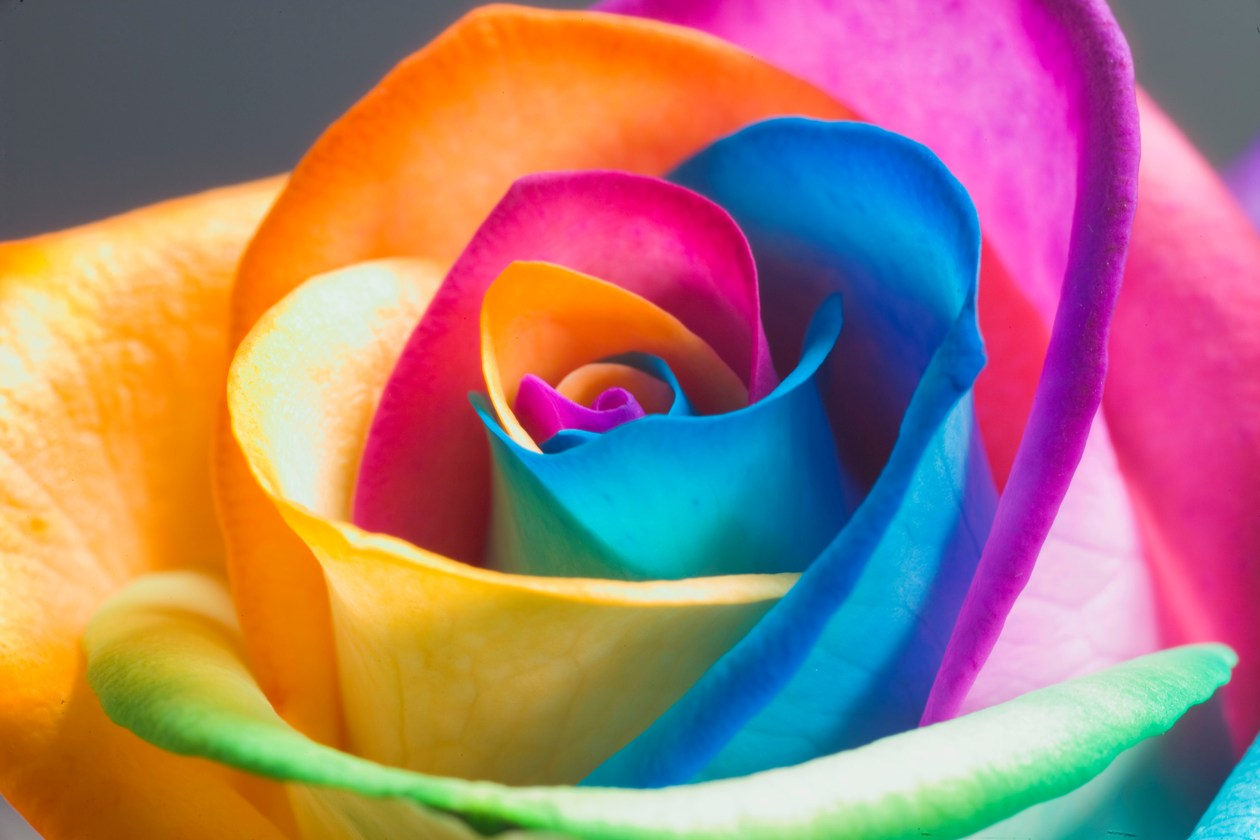 Картинки на телефон красивые цветы красочные