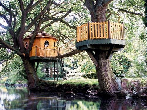 Дома на деревьях фото 4