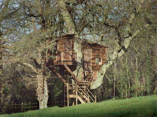 Дома на деревьях фото 13