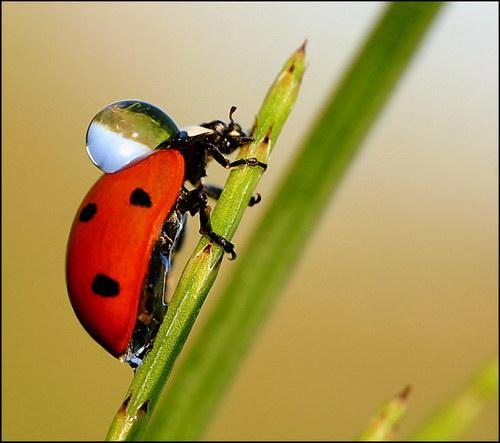 Макромир насекомые
